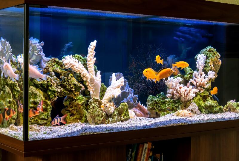 aquarienbau_gross
