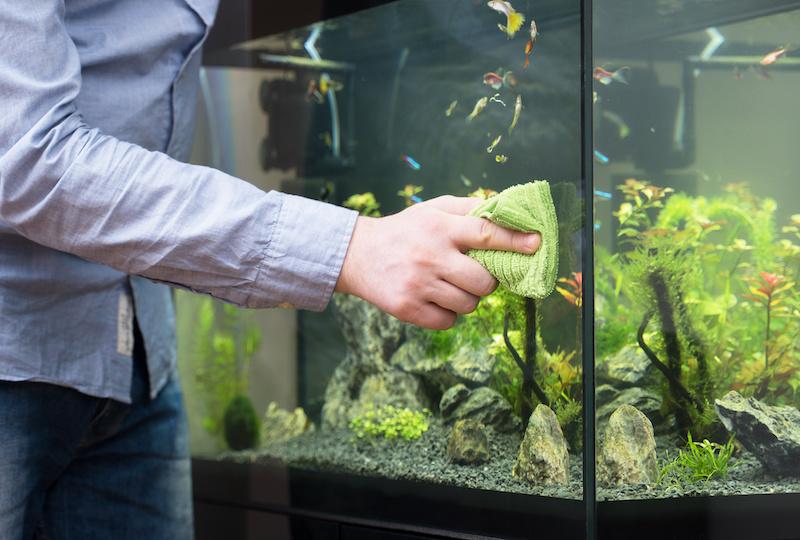Male hand cleaning aquarium using microfiber towel.